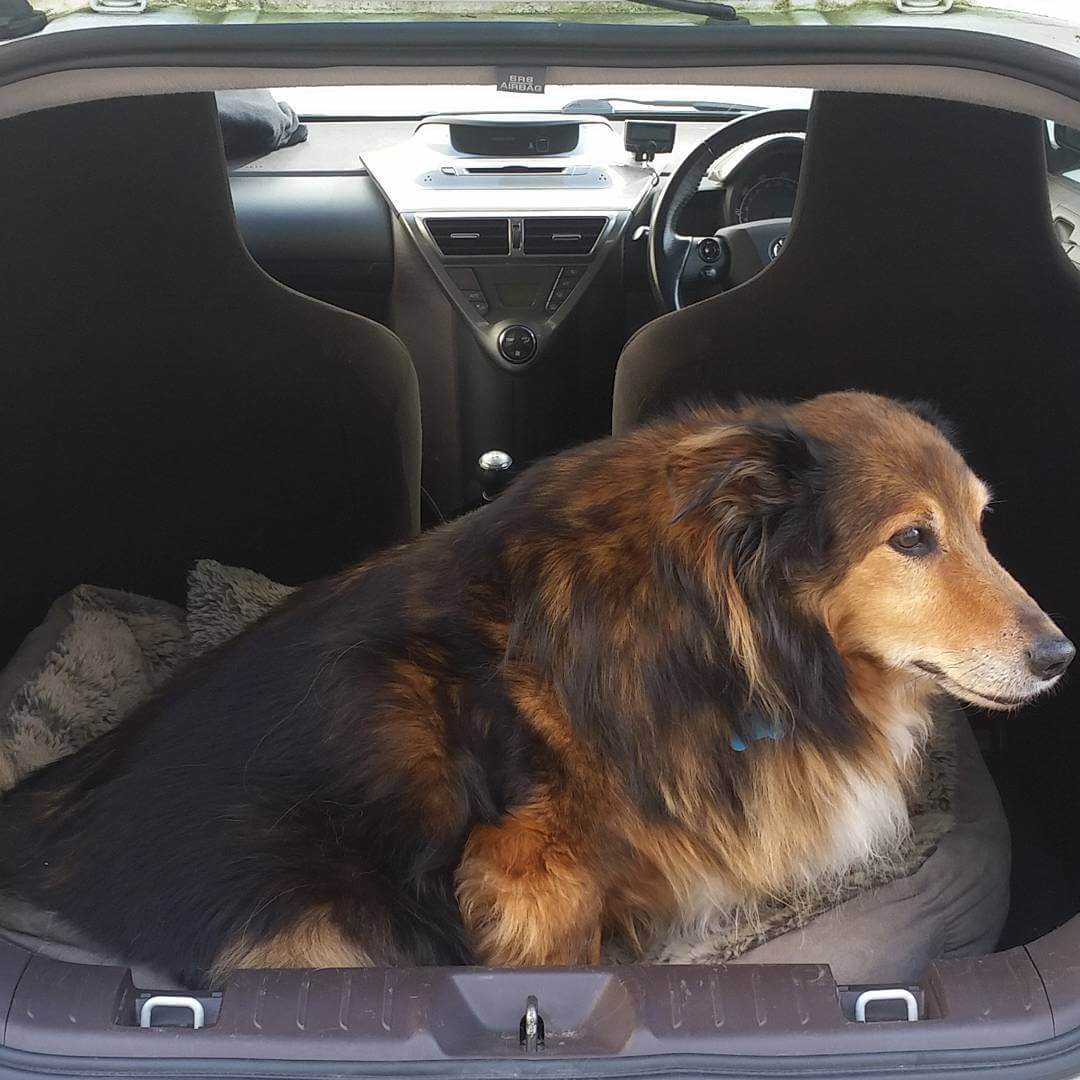 Small car, fluff dog